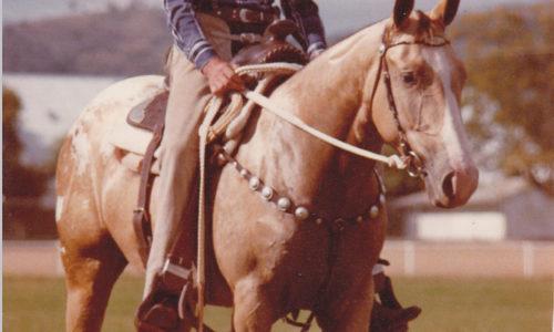 TS Capuccino 1982
