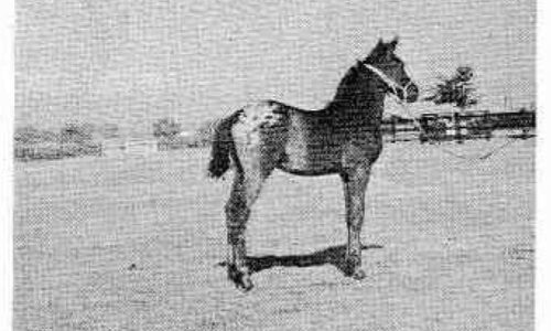 foal pic